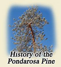 historyofpondarosapine