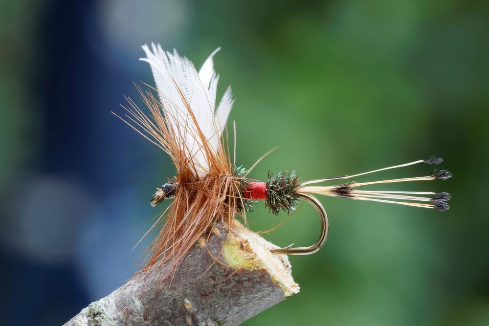 The Best Missoula Montana Fly Fishing